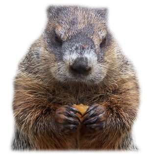 Happy Groundhog Day - Groundhog PNG HD