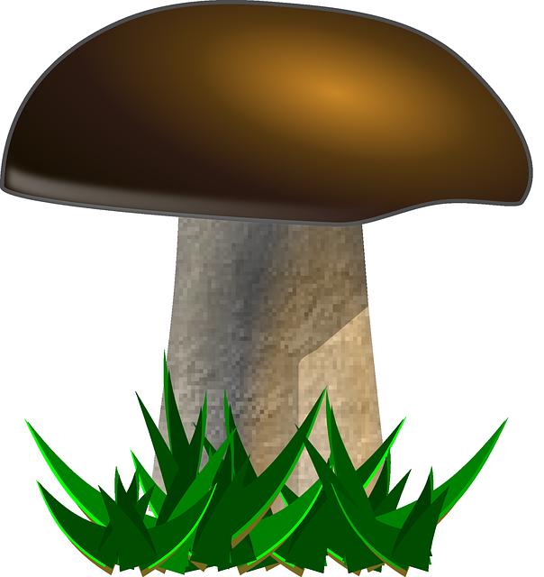 Darmo grafika wektorowa: Grzyb, Żółty Borowikami, Borowik - Gratis obraz na  Pixabay - 160043 - Grzyb PNG