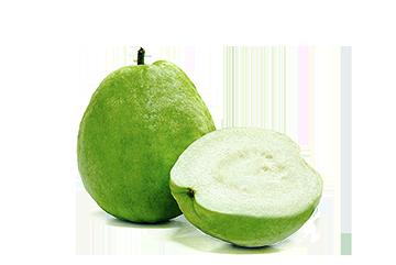 Guava PNG - 15951