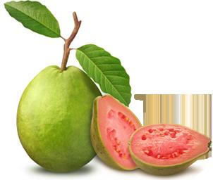 Guava PNG - 15952
