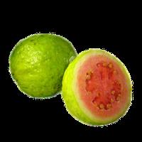Guava PNG - 15949