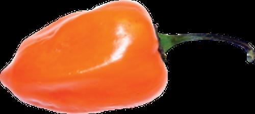 Habanero PNG - 52922