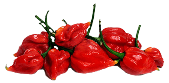 FIRED UP YOUR PASSION FOR HABANEROS IN EVERY BITE. - Habanero PNG