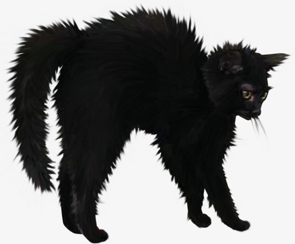Angry black cat Halloween, Halloween, Anger, Black Cat PNG Image and Clipart - Halloween Black Cats PNG