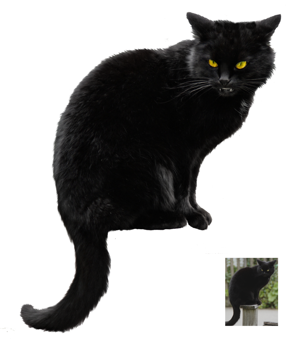 . PlusPng.com Black cat ~ Halloween VS STOCK by AStoKo - Halloween Black Cats PNG