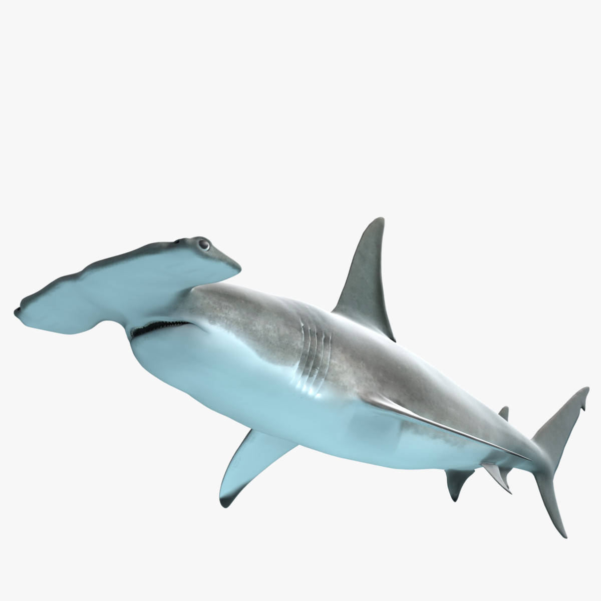 Hammerhead Shark PNG HD - 127817