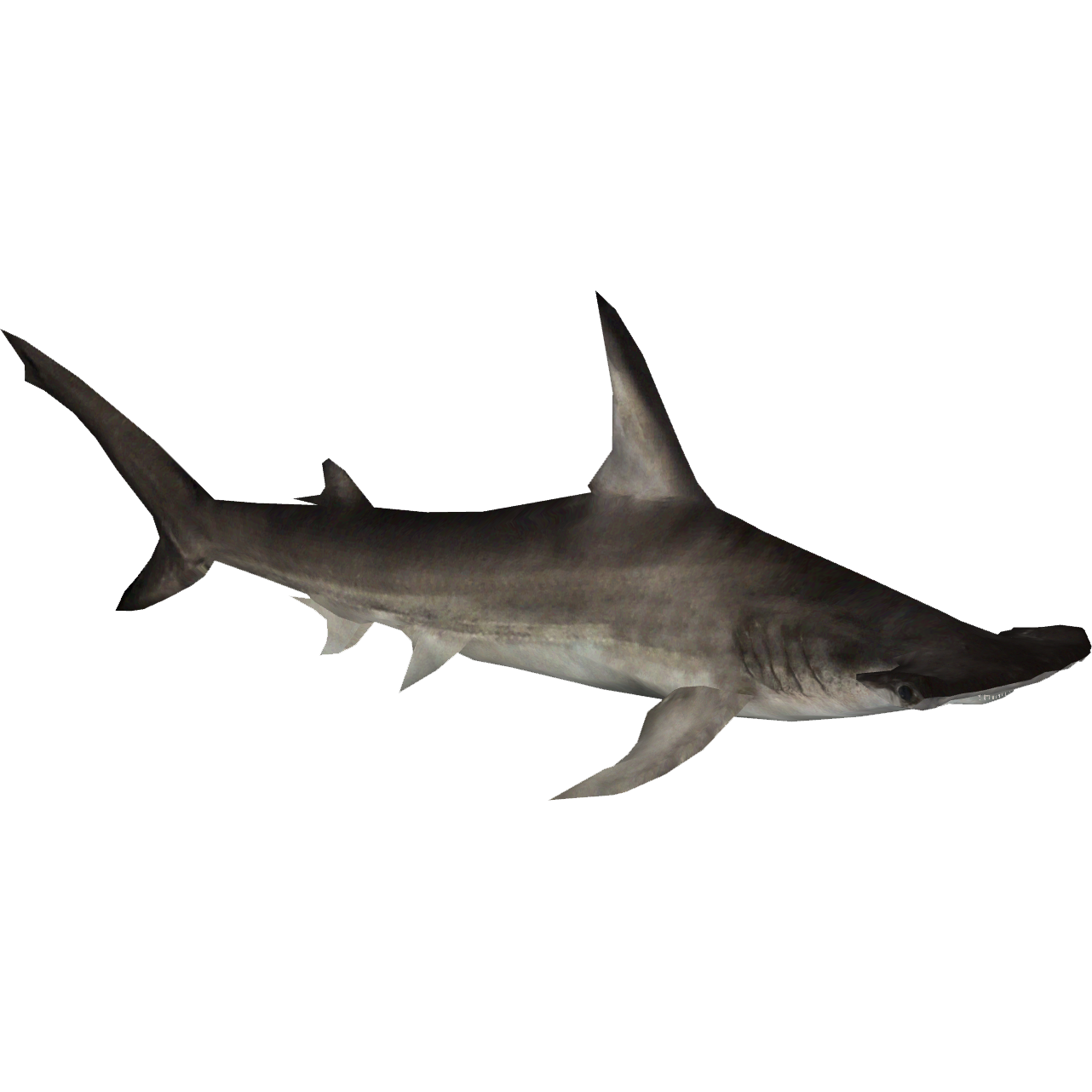 Hammerhead Shark PNG HD - 127824