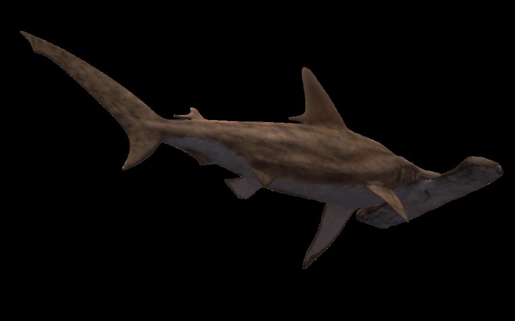 Hammerhead Shark PNG HD - 127816
