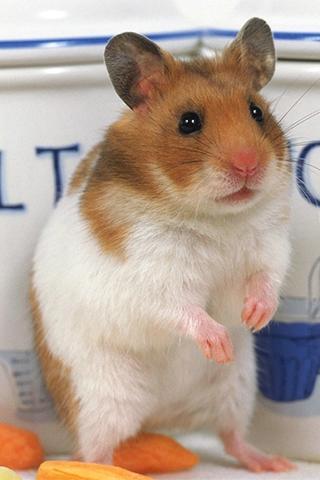 Hamster PNG HD - 125460