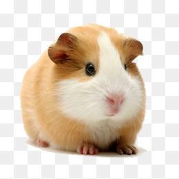 Hamster PNG HD - 125447