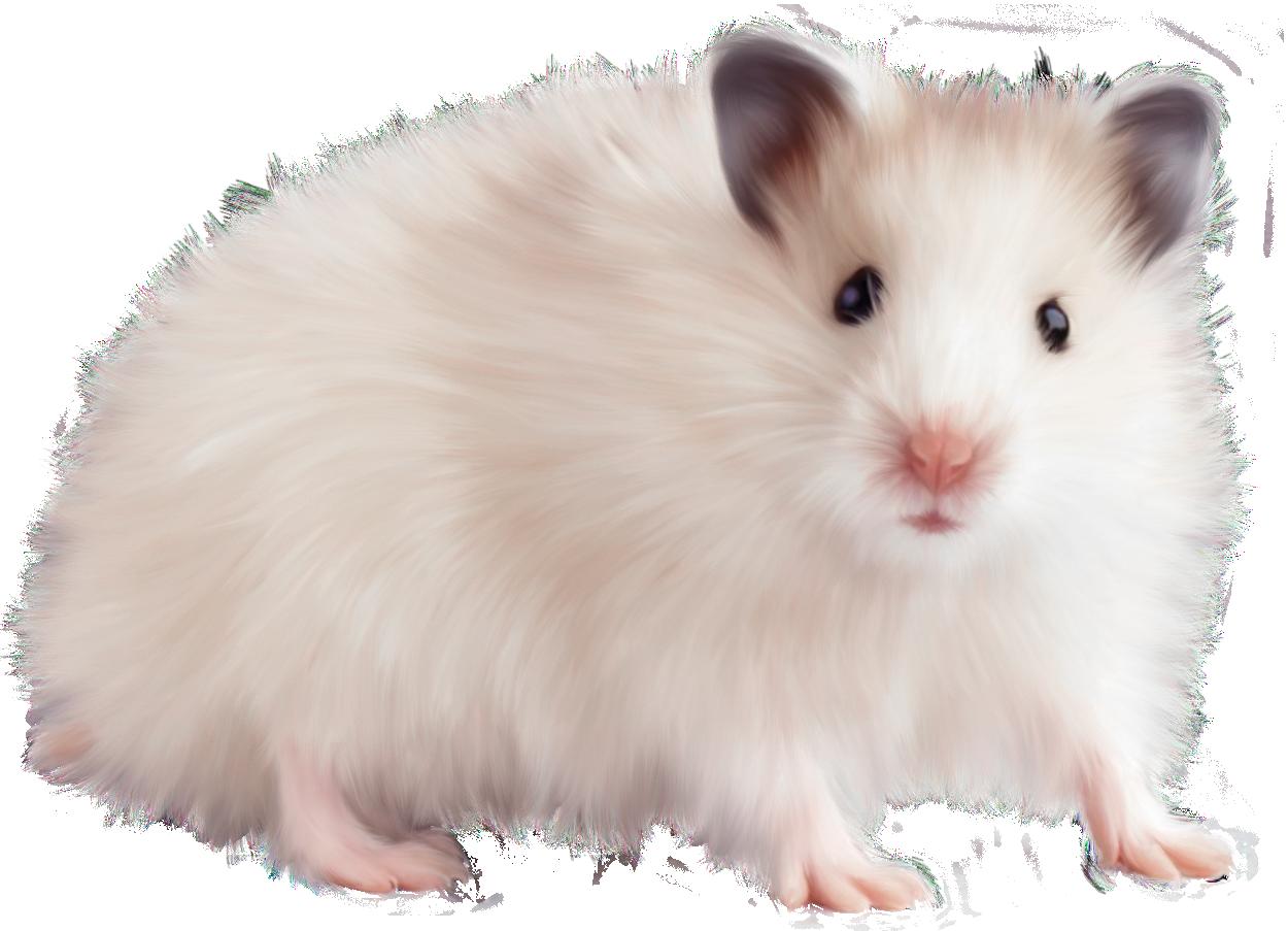 Hamster PNG HD - 125449