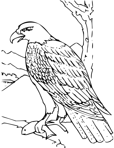Black Hawk PNG Clip arts - Hawk PNG Black And White