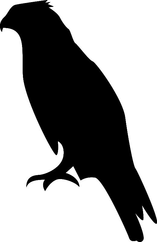 Hawk clip art download - Hawk PNG Black And White