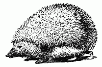 Hedgehog PNG Black And White - 48656