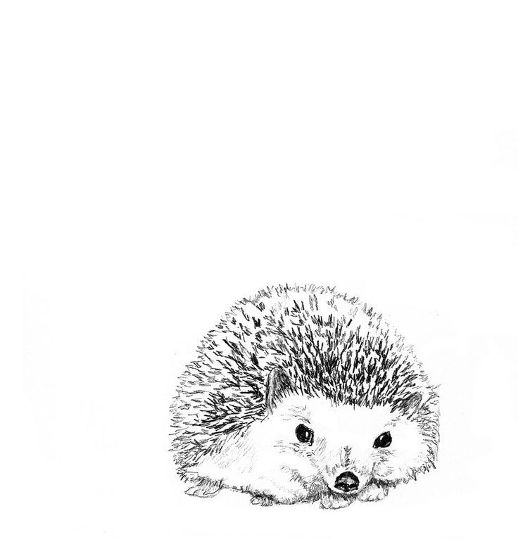 Hedgehog PNG Black And White - 48657