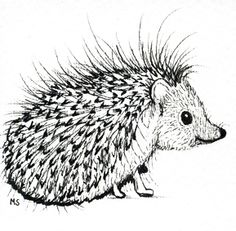 Hedgehog PNG Black And White - 48660