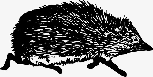 Hedgehog PNG Black And White - 48654