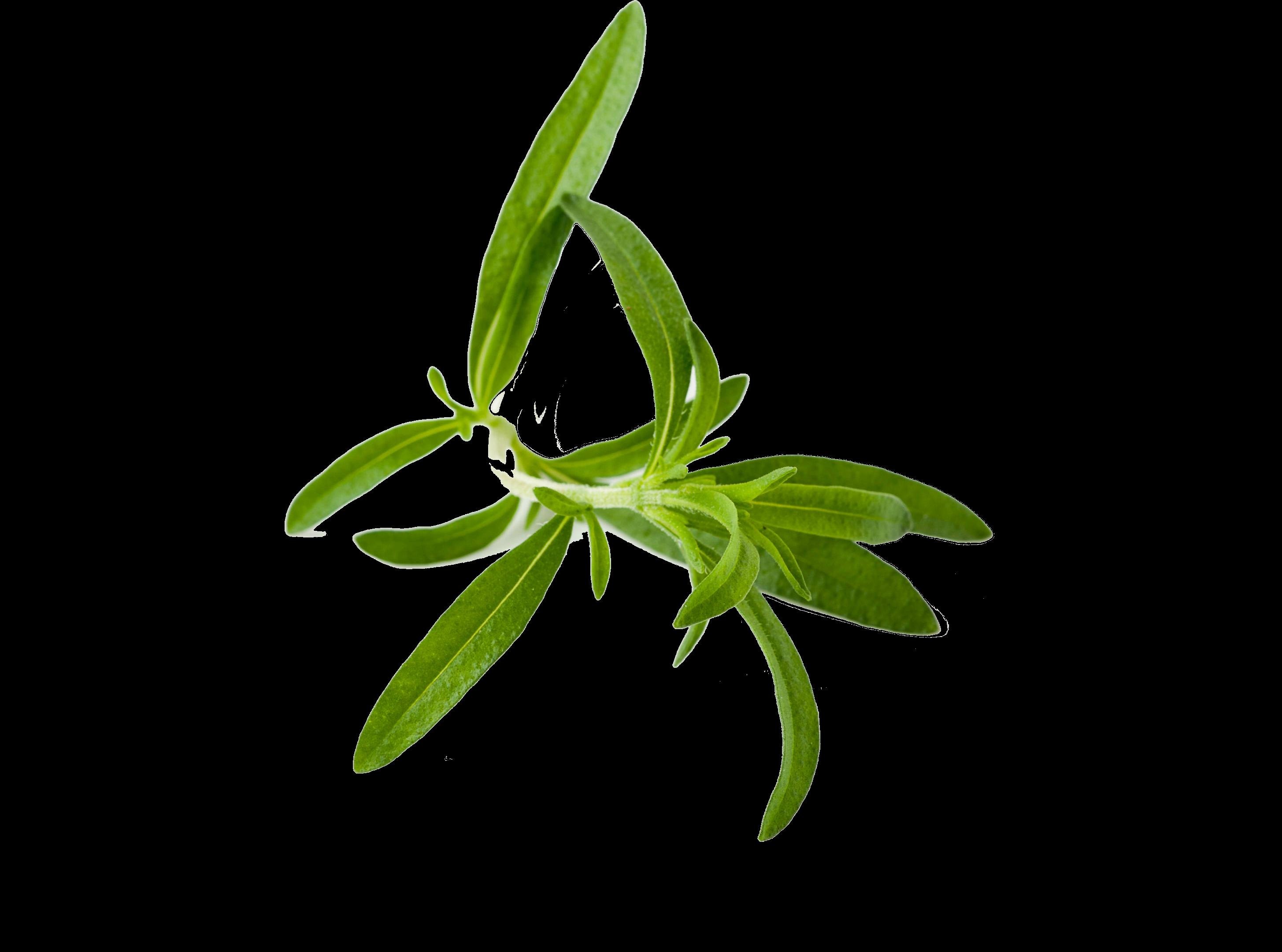 Herbs HD PNG - 91736