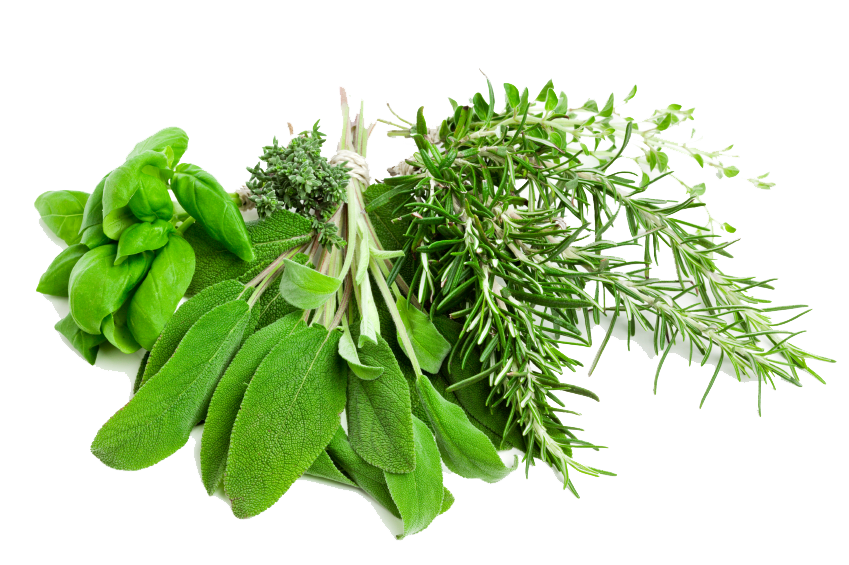 Free Herbs PNG Pic Transparent PNG - Herbs HD PNG