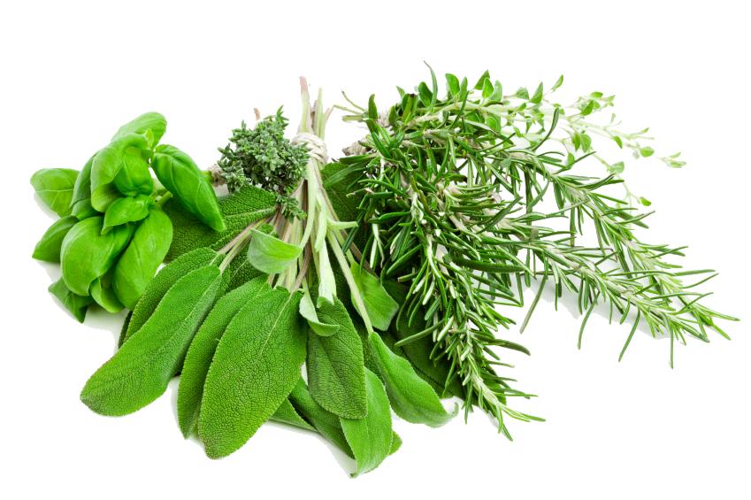 Herbs HD PNG - 91725