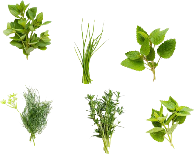 Fresh Culinary Herbs - Herbs HD PNG