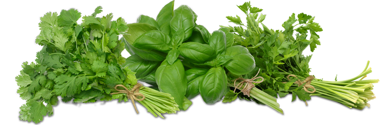 Fresh Herbs - Herbs HD PNG