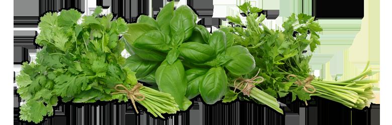 Herbs HD PNG - 91731