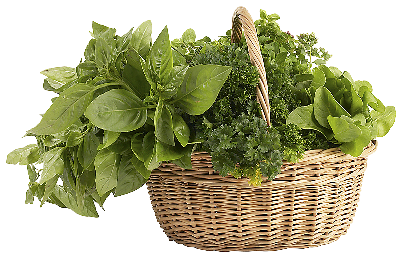 Herbs PNG Clipart - Herbs HD PNG