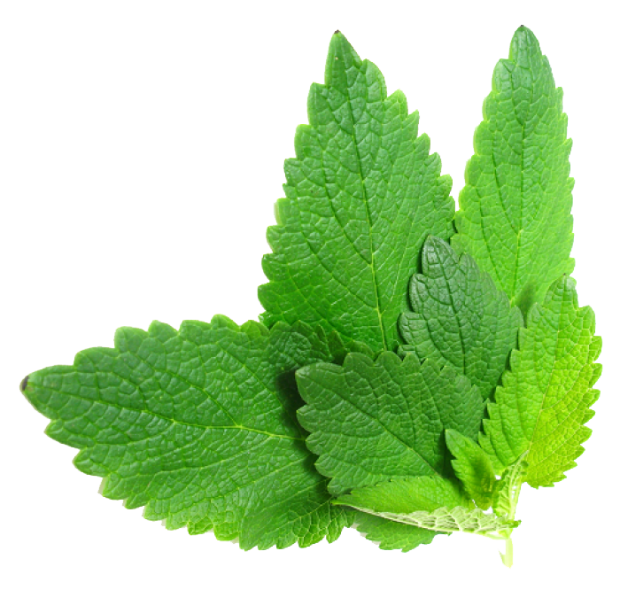 Herbs PNG Transparent Image