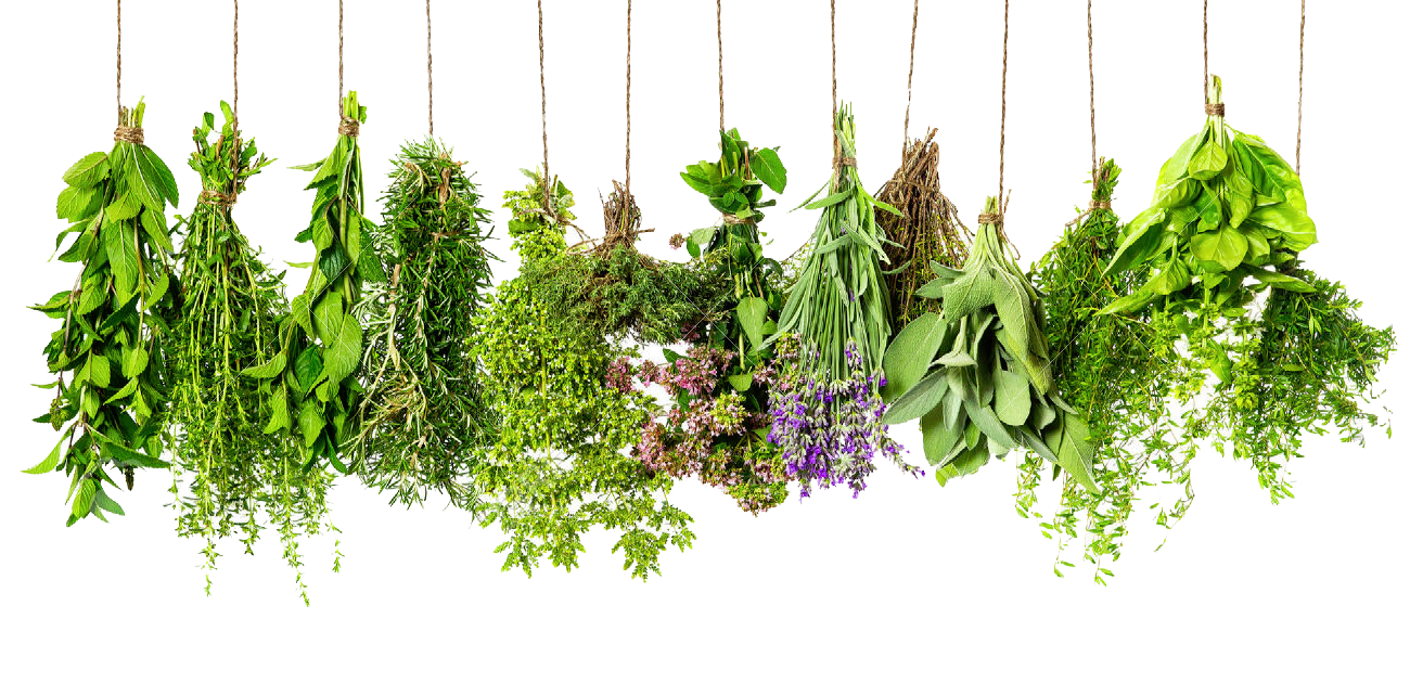 Herbs PNG HD - Herbs HD PNG