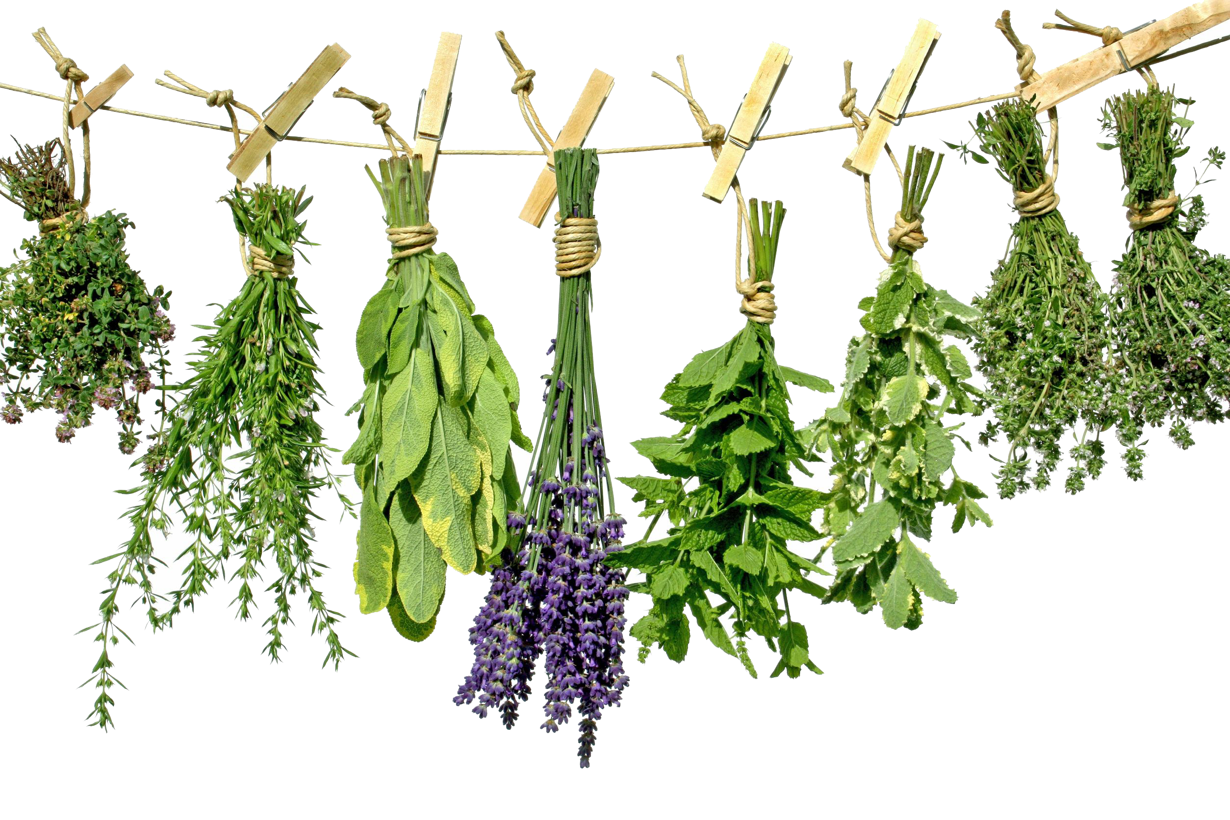Herbs PNG Photo - Herbs HD PNG