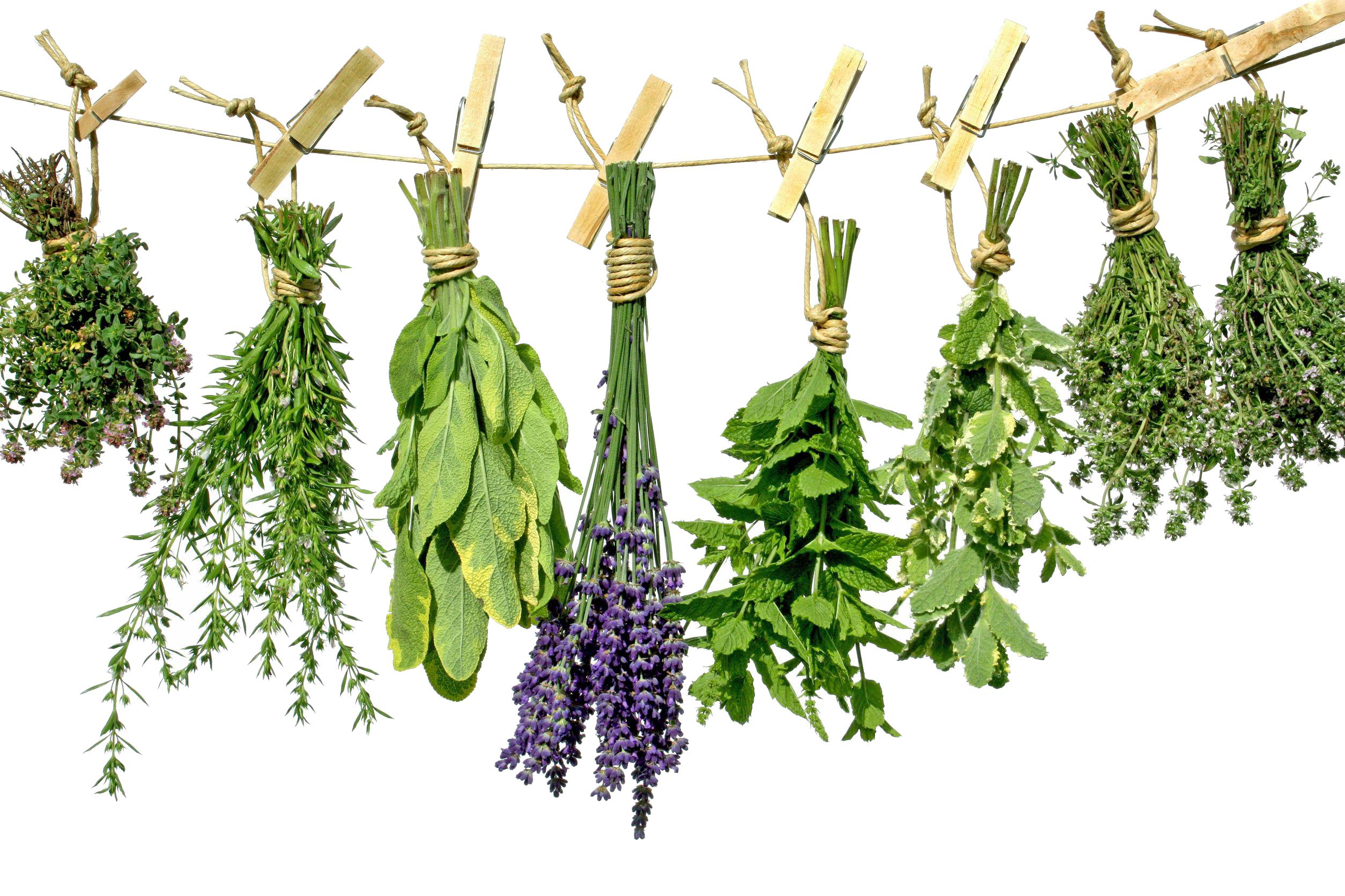 Herbs HD PNG - 91733