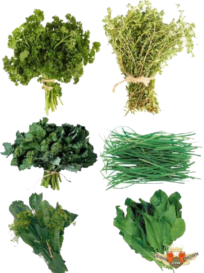 Herbs HD PNG - 91732