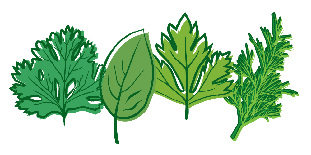Herbs PNG Picture
