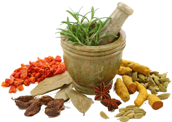 Herbs PNG Transparent Image - Herbs HD PNG
