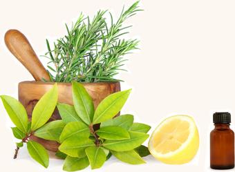 Herbs HD PNG - 91726