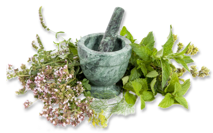 User-Friendly Interface - Herbs HD PNG
