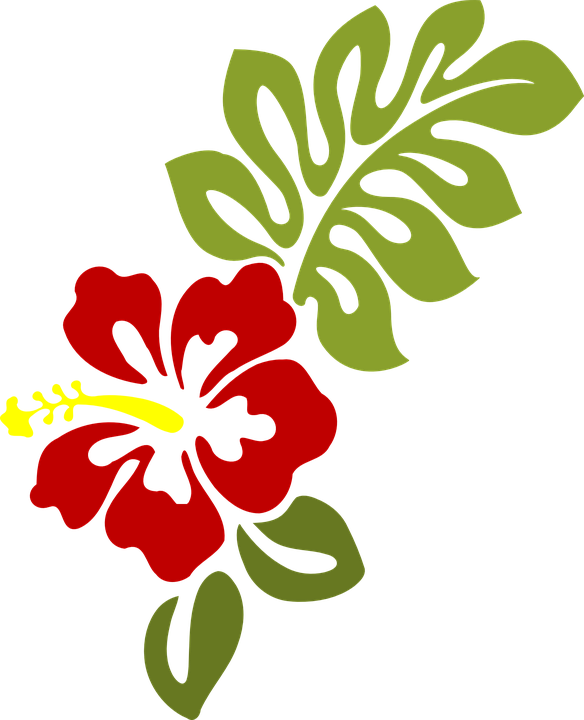 Hibiscus, Blossom, Leaf, Red, Blooming, Nature - Hibiscus Leaf PNG