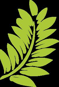 Hibiscus Leaf Clip Art - Hibiscus Leaf PNG