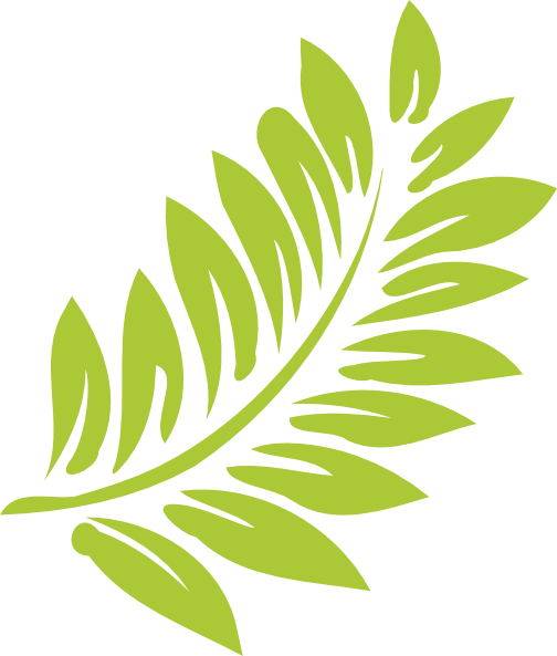 Hibiscus Leaf PNG