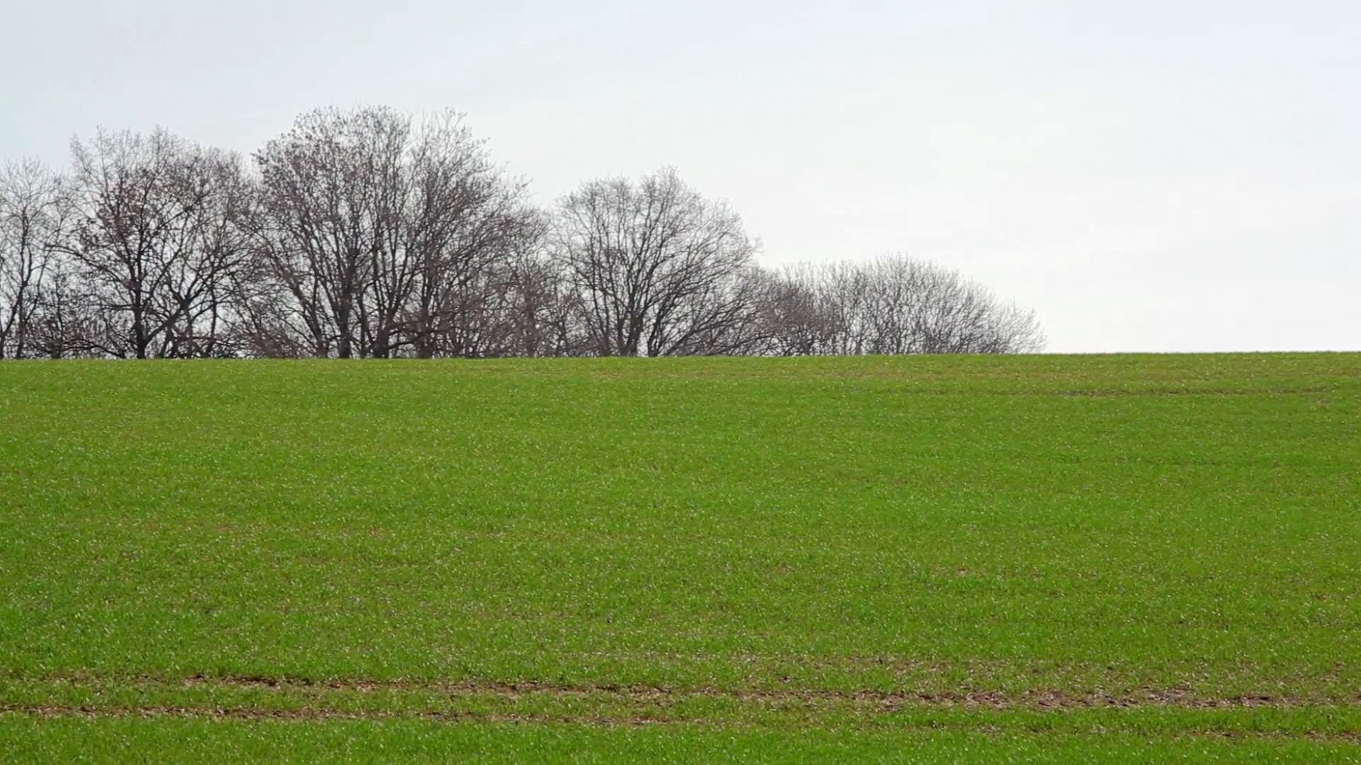 Green rolling hill grass field, trees in background, winter, Germany Stock  Video Footage - VideoBlocks - Hill Background PNG
