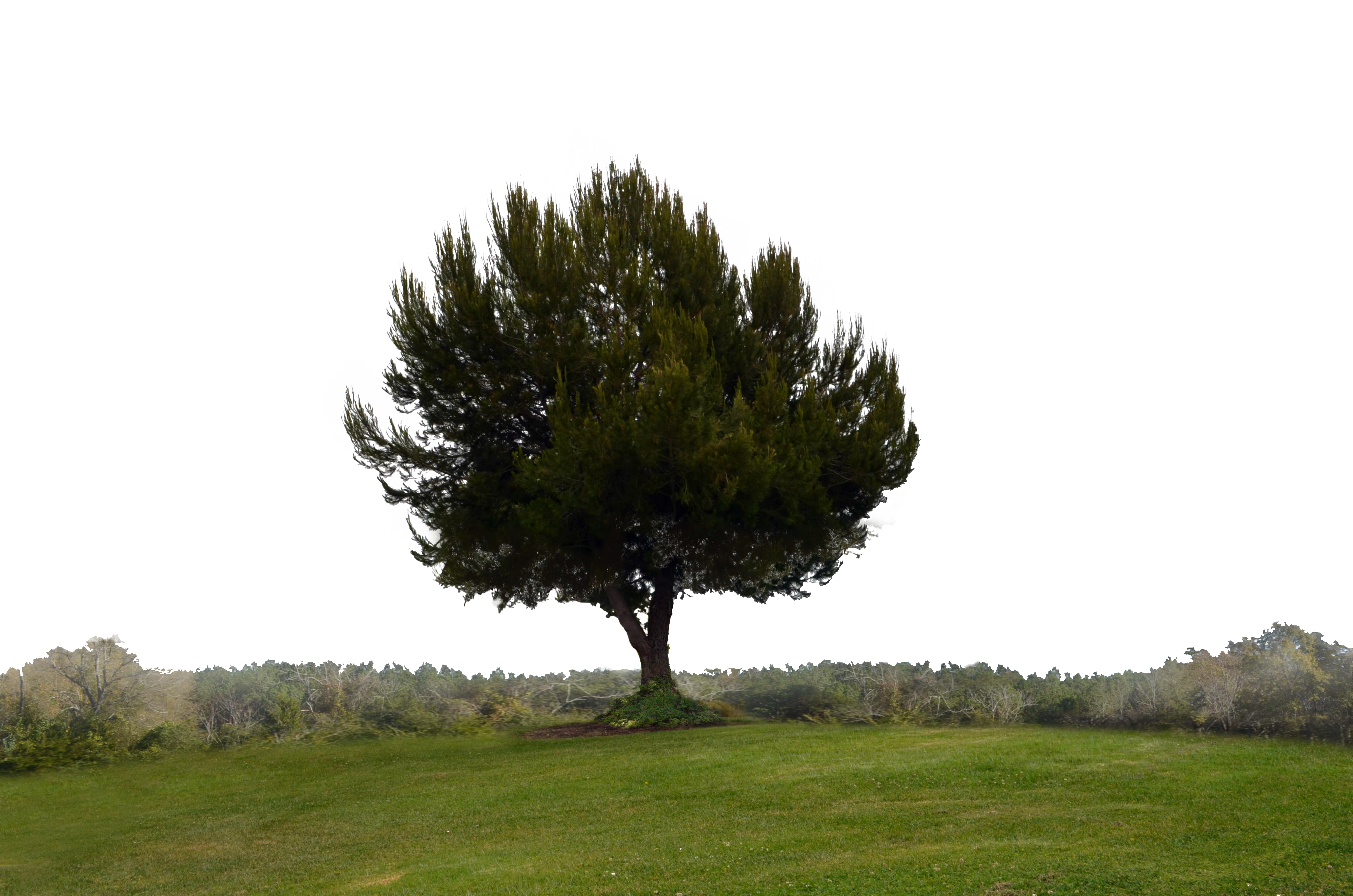 . PlusPng.com Single Tree on Hill Background Stock 0110 PNG Elem by annamae22 - Hill Background PNG