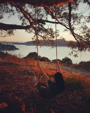 #hippie #tree #swing #sunset #goldengatepark #december #2017 #sanfrancisco - Hippie Tree PNG