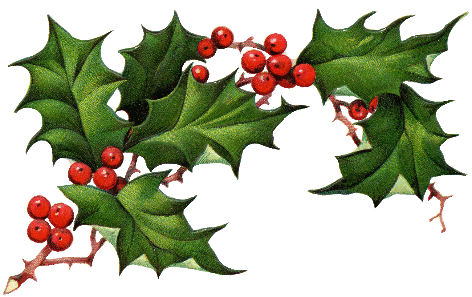 Christmas Elements PNG Pic - Holly And Ivy PNG
