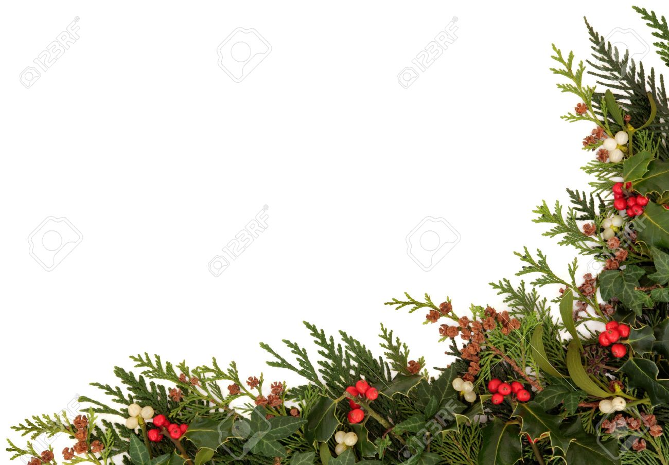 christmas traditional border of holly ivy mistletoe and cedar cypress leaf sprigs with pine