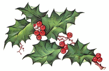 Holly And Ivy PNG - 69910