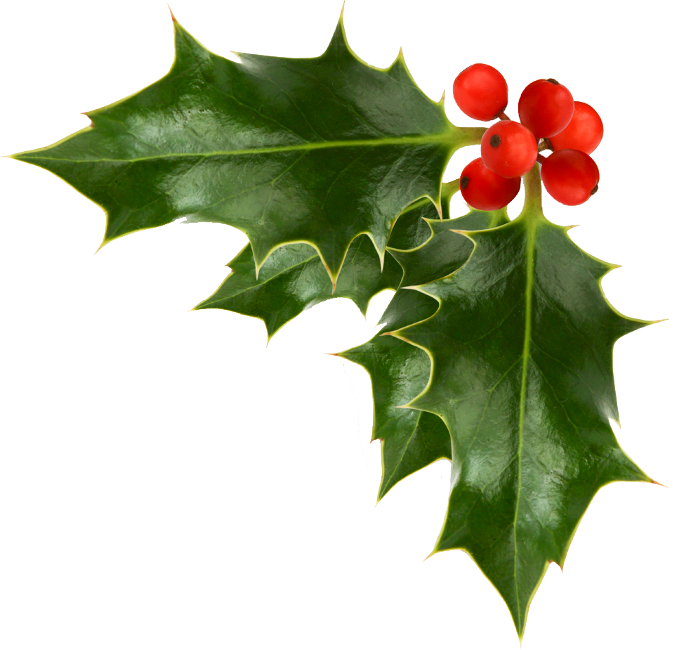 Holly And Ivy PNG - 69917
