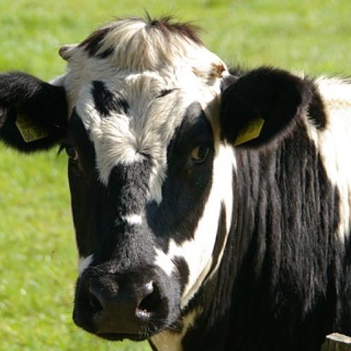 Holstein Cow PNG HD - 131007