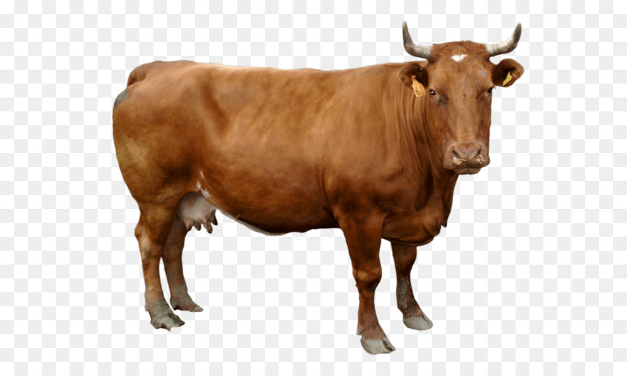 Holstein Cow PNG HD - 130997