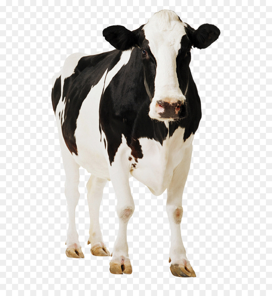 Holstein Cow PNG HD - 130993